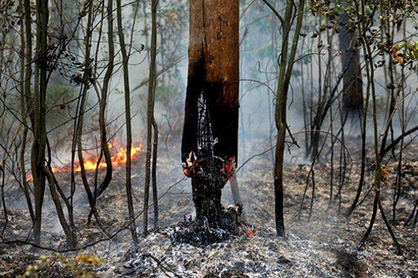 Путин лично тушит пожары вблизи Рязани