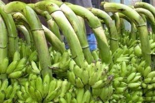 """Латинская Америка и ЕС остановили """"банановую войну"""""""