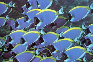 В салоне красоты педикюр делают рыбки (видео)