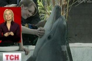 Дельфины умеют говорить (видео)