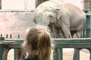 В Одессе умер слон (видео)