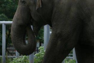 В Киевском зоопарке - День слона (видео)