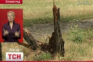 В Кировограде уничтожают деревья (видео)