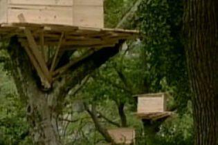 В Нью-Йорке возвели дома на деревьях (видео)