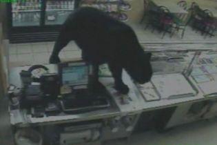 Медведи терроризируют жителей румынских городов