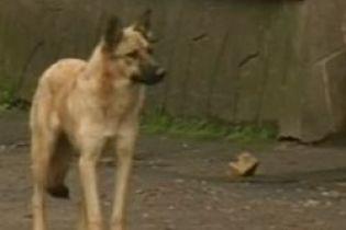 В Ровно пес терроризирует целый микрорайон