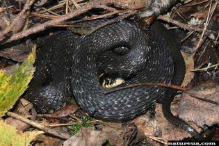 В селе неподалёку от Ужгорода змеи заползли в детсад (видео)