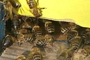 Украинский мед - вреден? (видео)