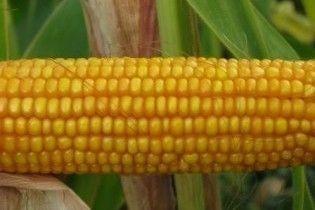 Украина ограничит экспорт кукурузы