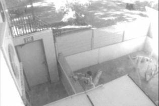 Мальчик накормил крокодила жителями зоопарка (видео)
