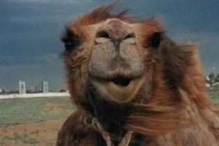 Заезжие циркачи бросили в Запорожье замученного верблюда