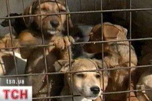 Рада защитила животных от жестокого поведения