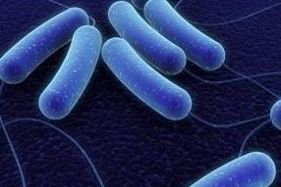 Ученые установили, что бактерии обладают обонянием