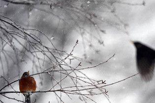 На Украину надвигаются 5 циклонов со снегом, дождем, гололедицей, шквалами