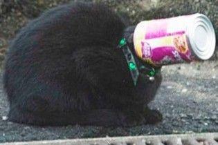 Кошка с жестянкой на голове сама пришлая к спасателям