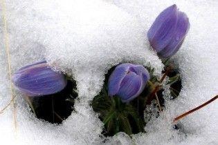 Погода в Украине на понедельник, 15 марта