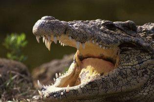 Археологи нашли останки двуногих крокодилов