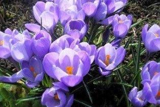 На Житомирщине школьнице грозит пять лет за выкопанные в саду цветы