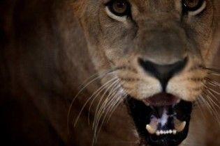 В США ресторан предлагает бургеры с мясом львов