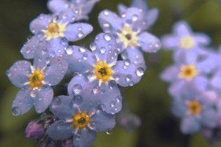 Погода в Украине на воскресенье, 30 мая