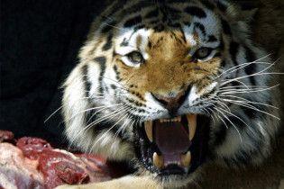 В Приморском крае застрелили тигра-людоеда