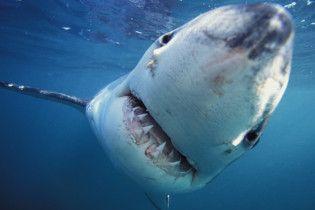 В Египте турист случайно убил акулу-людоедку, придавив ее своим задом