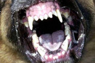 На Луганщине десятилетнюю девочку загрызли собаки