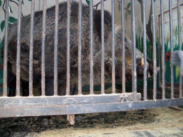 В покинутом зоопарке в Северодонецке гибнут экзотичные животные