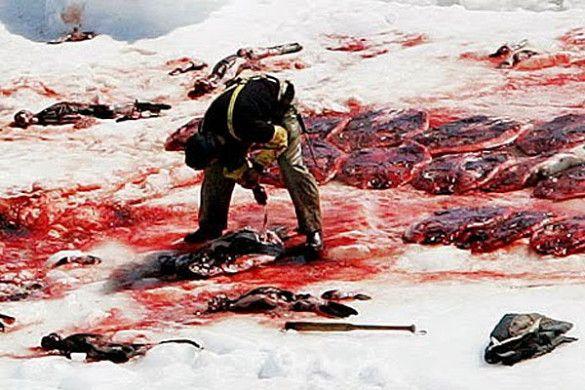 Полювання на тюленів