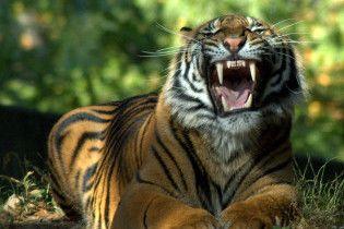 Разъяренная женщина с помощью половника спасла мужа от тигра