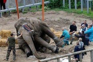 Столичные депутаты подарят киевлянам слона
