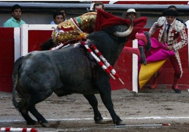 Звезда испанской корриды оказался при смерти после поединка с быком