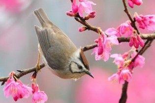 Синоптики рассказали, когда придет настоящая весна
