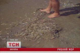 У Чорному морі через спеку масово гине риба