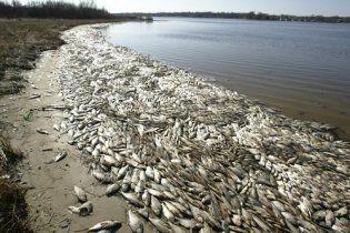 На Одещині масово гине риба