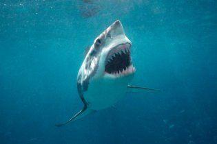 Біля узбережжя Австралії гігантська акула розірвала серфінгіста