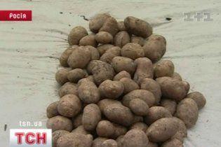 В Украине картошка становится дефицитом