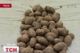 Україна забезпечить Росію картоплею