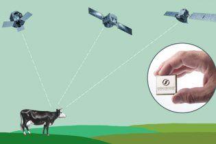 Росіяни стежитимуть за своїми коровами та козами з космосу