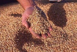 Правительство повысило цены на зерно (видео)