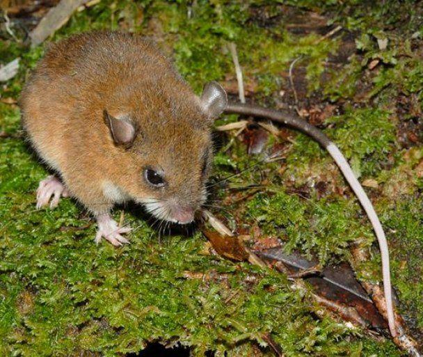 """В """"затерянном мире"""" Папуа - Новой Гвинеи открыли 200 новых видов"""