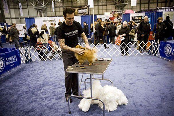 """Виставка кішок і собак """"Meet The Breeds"""" у Нью-Йорку"""
