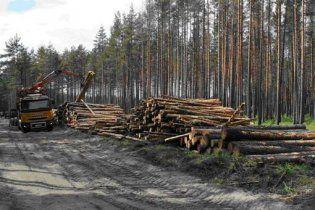Під Москвою міліція затримала дітей, які протестували проти вирубки лісу