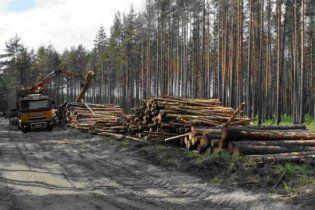 Под Москвой милиция задержала детей, которые протестовали против вырубки леса