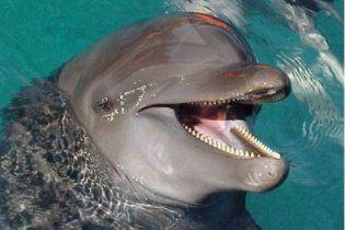 Пара одеських дельфінів вміє лікувати людей