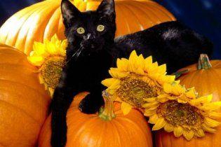 У США ховають чорних кішок: у Halloween на них полюють сатаністи