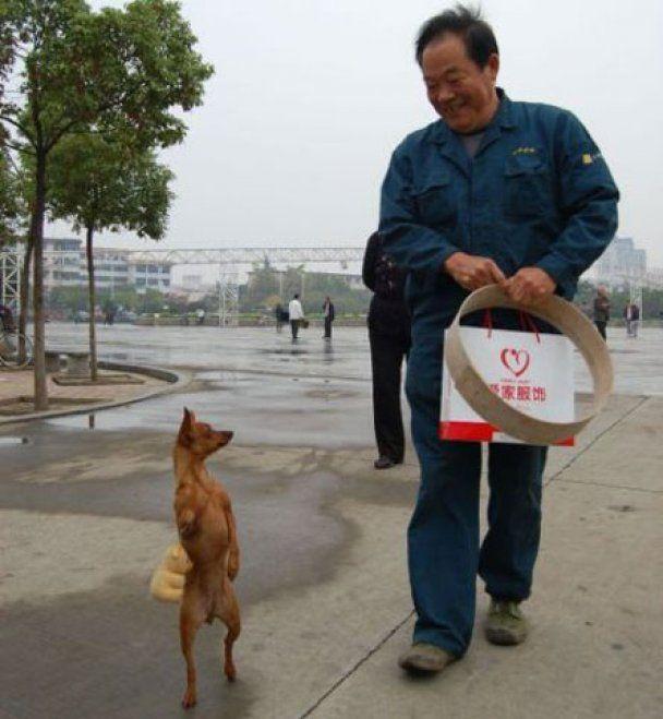 Китайський собака навчився ходити як людина