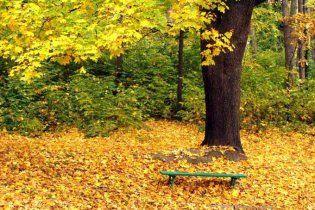 Британський вчений пояснив, чому восени жовкне листя