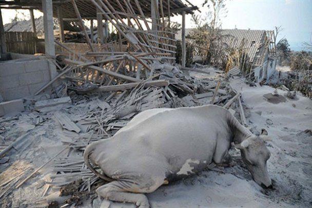 Індонезія потерпає від землетрусів, вулкану і цунамі