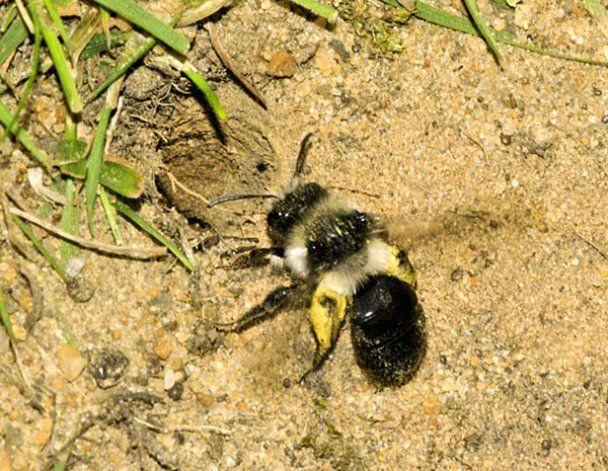 Під загрозою зникнення опинилася п'ята частина тварин і рослин Землі